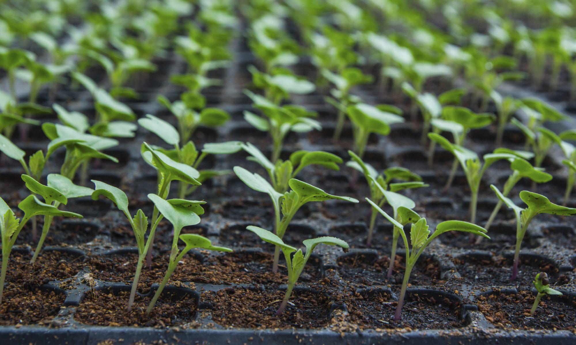 Plant Propagators Ltd